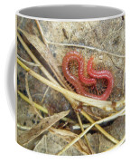 Red Soil Centipede - Strigamia Coffee Mug