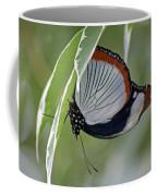 Red Spot Diadem Butterfly Coffee Mug