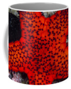 Red Starfish In Raja Ampat, Indonesia Coffee Mug