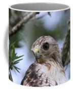 Red-tailed Hawk Has Superior Vision Coffee Mug
