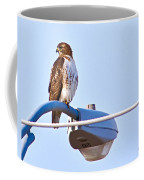 Red-tailed Hawk Perched Coffee Mug