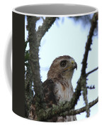 Red-tailed Hawk - Young And The Old Coffee Mug