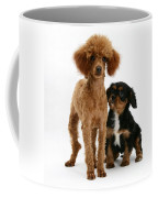 Red Toy Poodle And Cavalier King Coffee Mug