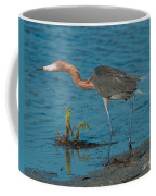 Reddish Egret Hunting Coffee Mug