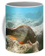 Redlip Parrotfish Coffee Mug