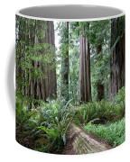 Redwood National Park, California Coffee Mug