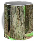Redwood Trees Art Prints Big California Redwoods Coffee Mug