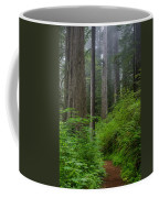Redwoods Along Ossagon Trail Coffee Mug