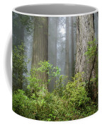 Redwoods In May Coffee Mug