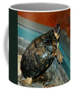 Reflecting Turtle Coffee Mug