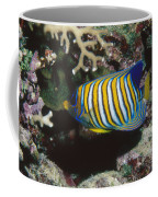 Regal Angelfish In Coral Reef Coffee Mug