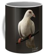 Ring-necked Dove Coffee Mug