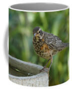 Robin Contemplating Getting In Coffee Mug