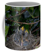 Robin Nestlings Coffee Mug by Ted Kinsman