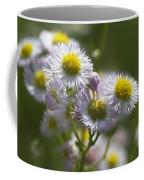 Robin's Plantain - Alabama Wildflowers Coffee Mug