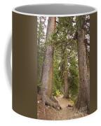 Rocky Mountain Forest Walk Coffee Mug