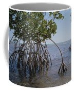 Root Legs Of Red Mangroves Extend Coffee Mug by Medford Taylor