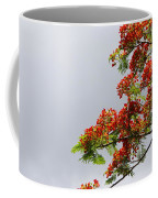 Royal Poinciana Tree Coffee Mug