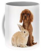 Ruby Cavalier King Charles Spaniel Pup Coffee Mug