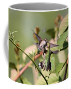 Ruby-throated Hummingbird - An Altercation Coffee Mug