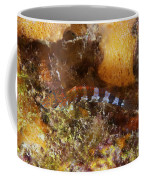 Saddled Blenny, Bonaire, Caribbean Coffee Mug