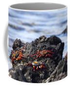 Sally Lightfoot Crabs Coffee Mug