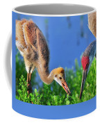 Sandhill Cranes Having Breakfast Coffee Mug