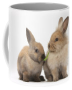 Sandy Rabbits Sharing Grass Coffee Mug