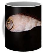 Scalloped Ribbonfish Coffee Mug