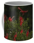 Scarlet Ibises Roost In A Red Mangrove Coffee Mug