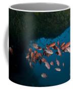 School Of Red Bigeye Under A Rocky Coffee Mug by Mathieu Meur