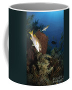 Schoolmaster Snapper, Belize Coffee Mug