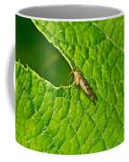 Scorpion Fly Nosing Around Coffee Mug