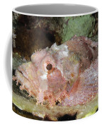 Scorpionfish, Indonesia Coffee Mug
