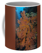 Sea Fan, Fiji Coffee Mug