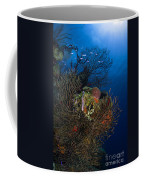 Sea Fan Seascape, Belize Coffee Mug