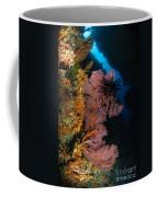 Sea Fans And Crinoid, Fiji Coffee Mug