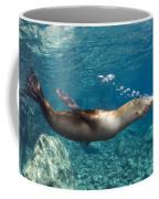 Sea Lion Blowing Bubbles, Los Islotes Coffee Mug
