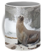 Sea Lion Monterey Coffee Mug