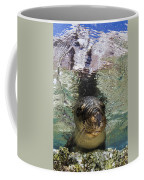 Sea Lion Portrait, Los Islotes, La Paz Coffee Mug by Todd Winner