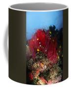 Sea Whips And Soft Coral, Fiji Coffee Mug