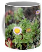 Seaside Fleabane Flowers Coffee Mug