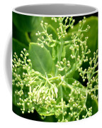 Sedum Droplets Coffee Mug