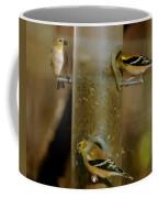 Seed Eating Song Birds Coffee Mug