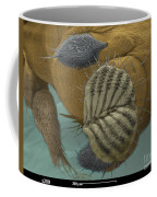 Sem Of A Fruit Fly Mouth Coffee Mug