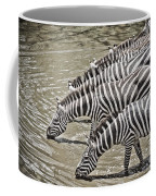 Several Thirsty Zebra Coffee Mug