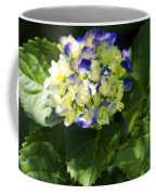 Shadowy Purple And White Emerging Hydrangea Coffee Mug