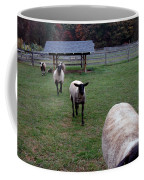 Sheep Feed Time Coffee Mug
