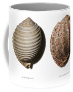 Shell Line Systems Coffee Mug
