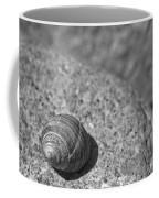 Shells IIi Coffee Mug by David Rucker